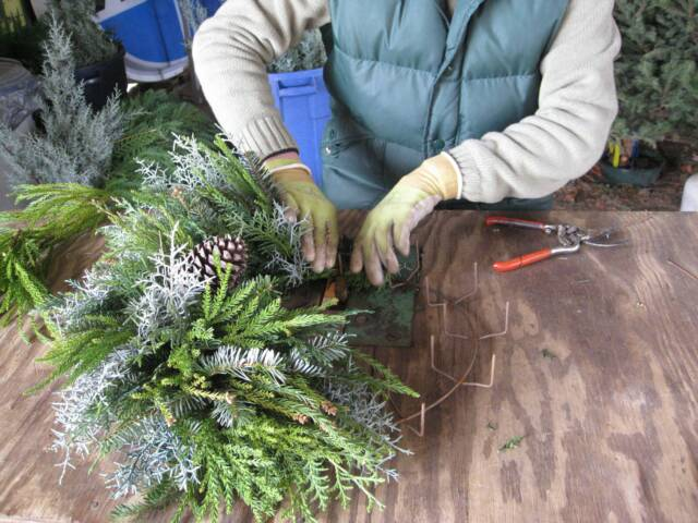 Christmas-Tree-Farming-Throughout-the-Year